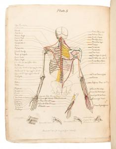 Carpue Anatomy