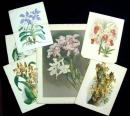 24 Color Lithograph Plates of Orchids