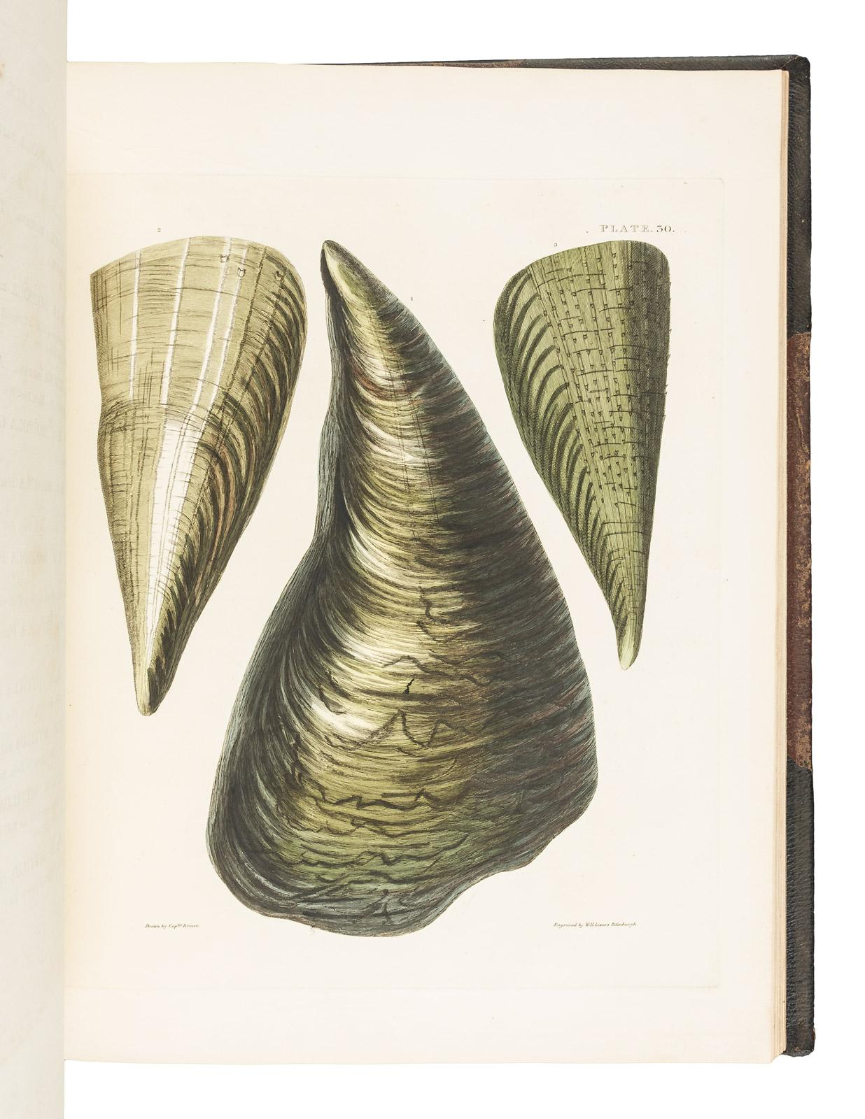 Illustrations Of The Conchology Great Britain And Ireland