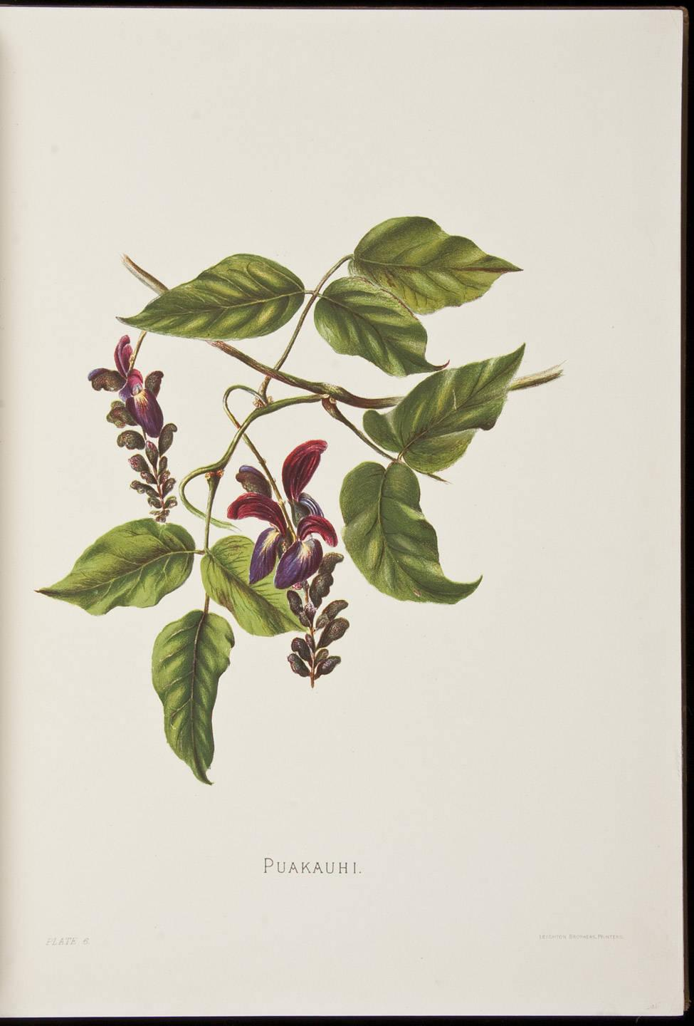 Indigenous flowers of the hawaiian islands forty four plates indigenous flowers of the hawaiian islands forty four plates painted in water colours and described by mrs francis sinclair jr price estimate 4000 izmirmasajfo