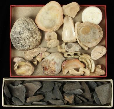 Lot of Shell and Basalt Fragments – ex Leo Fortess Collection